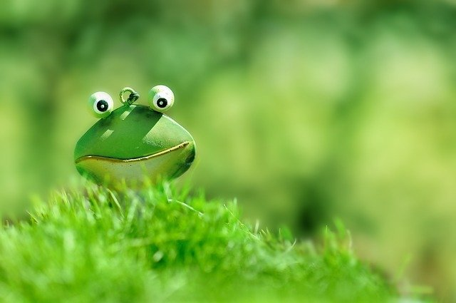 A confused yet optimistic frog